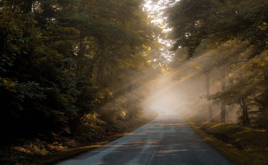 Straße durch einen Wald für Psychotherapie Sachsenhausen | Ines Hinz