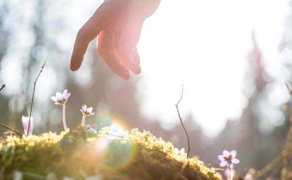 Hand, die Blumen berührt für Infos über Psychotherapie